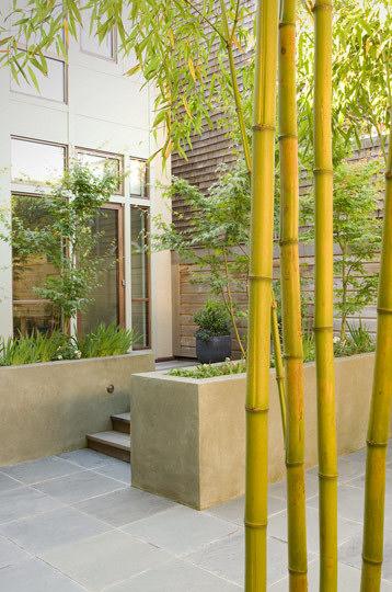 Planta de bambu en jardín moderno
