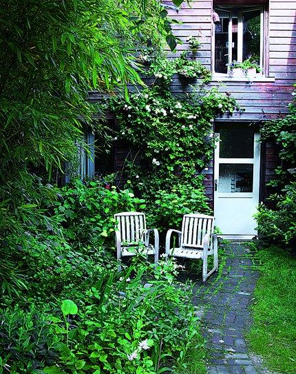 Frondoso jardín con plantas de bambú y rosales