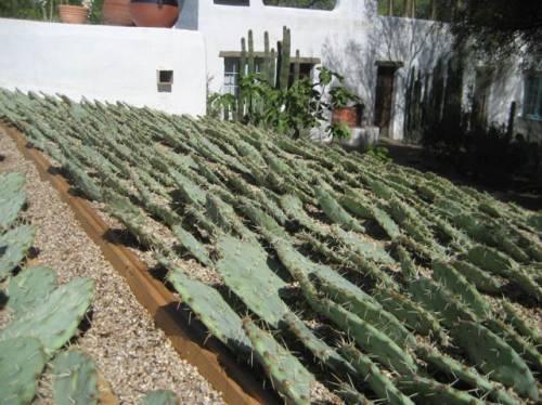 Techo verde con cactus 4