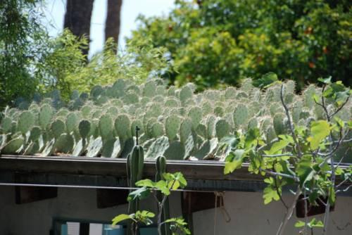 Techo verde con cactus 5