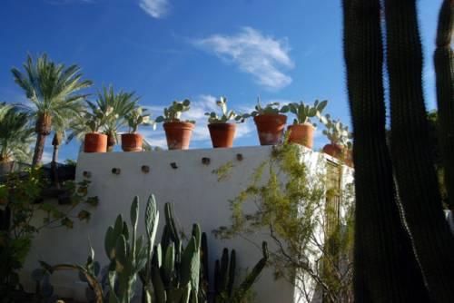 Techo verde con cactus 7