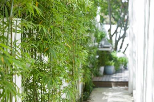 Jardin moderno cañas tacuara