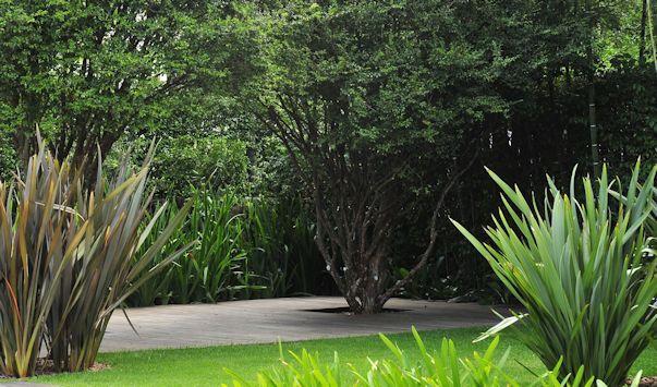 Jardin moderno y tropical, formios de diferentes colores