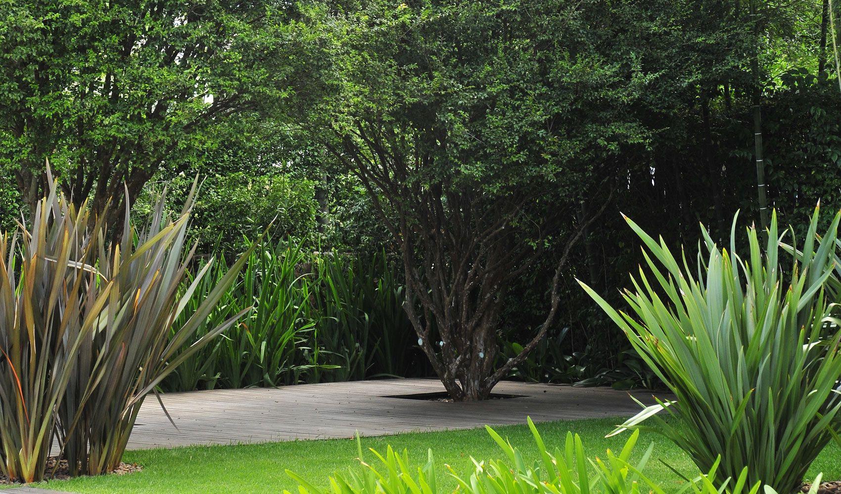 Dise o de exteriores jardines modernos y tropicales - Plantas verdes exterior ...
