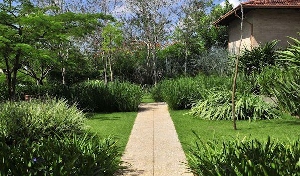 Jardines modernos y tropicales con formios y jacarandá