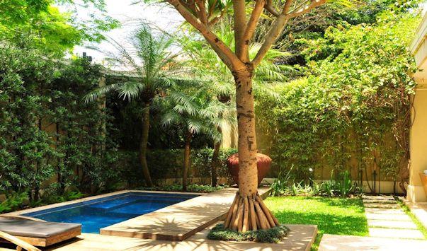 Jardín pequeño con palmeras