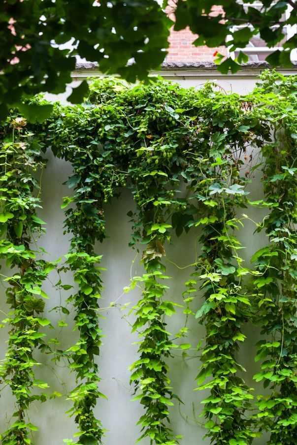 Jardines pequeños y modernos: un bosque en pocos metros 3