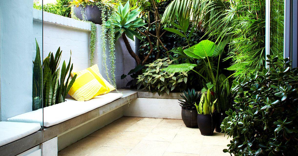 Dise o de patios peque os mini oasis en la ciudad - Plantas de interior tropicales ...