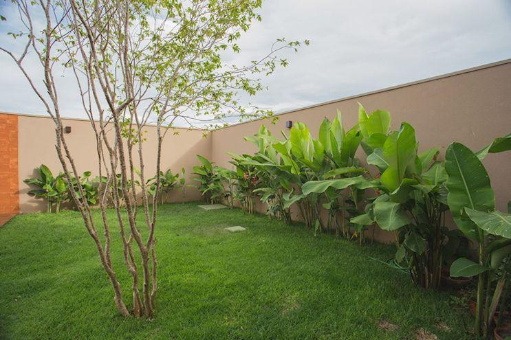 Conjunto de Bananeros o Bananos que bordean la pared y crean un estilo tropical en el diseño del jardín.