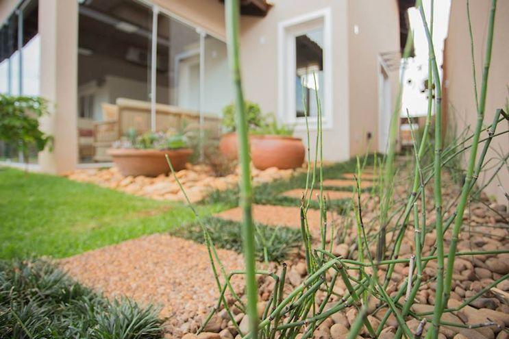 Equisetum en el diseño del jardín moderno tropical.