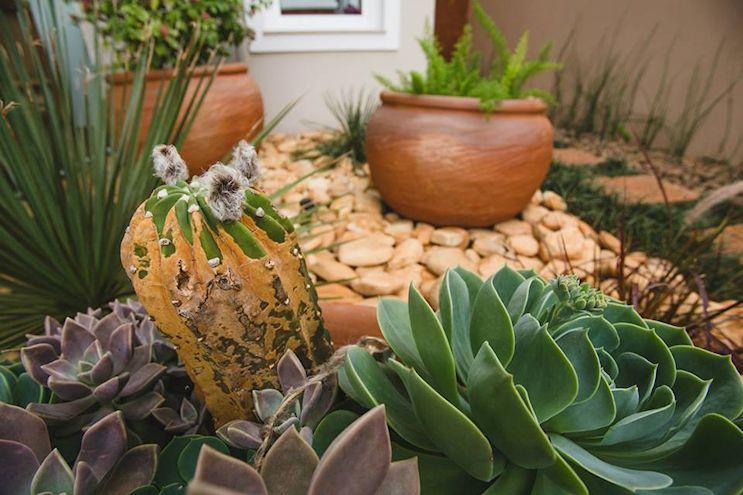 Detalle de suculenas y cactus.