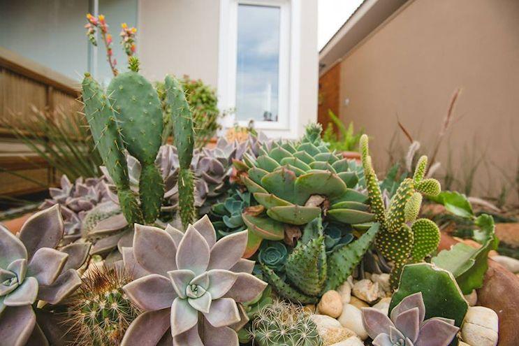 Las plantas tipo suculentas y cactus forman parte del sector seco del jardín, de inspiración mexicana.