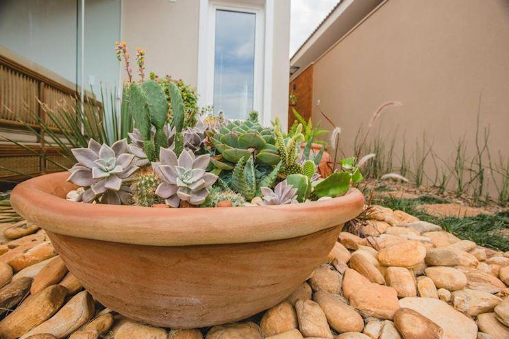 Maceta con cactus y suculentas.