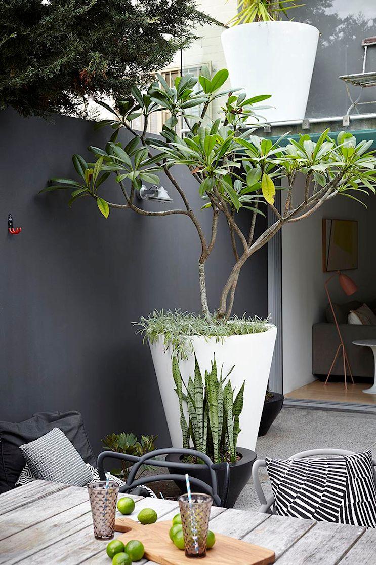 witte plantenbak met boom