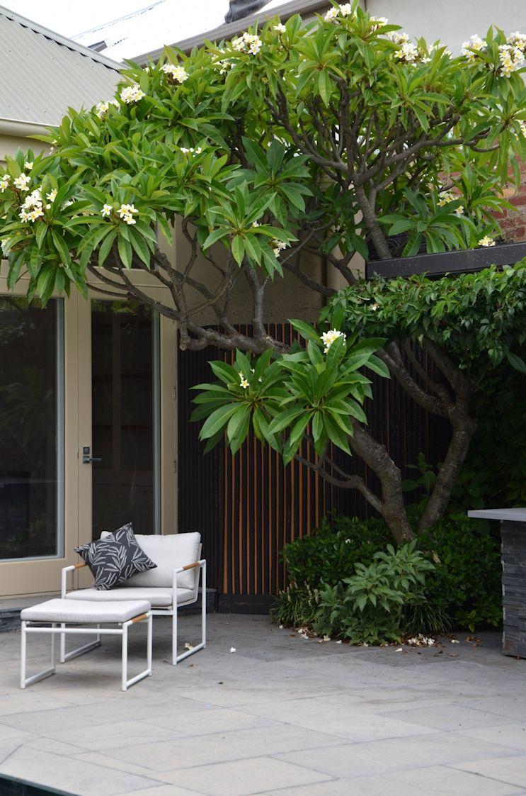 Diseño del jardín o patio trasero con pileta en estilo contemporáneo 3