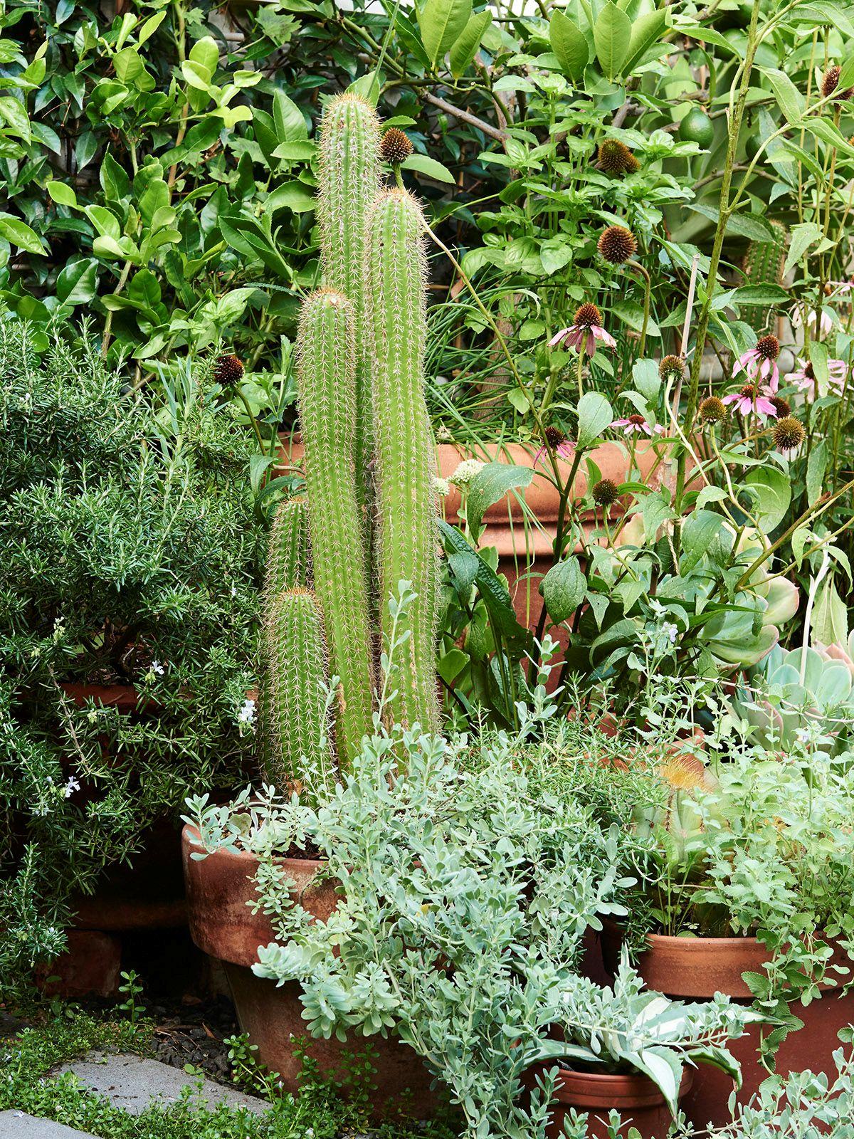 Dise o de jardines un jard n peque o y frondoso de 24 metros for Planta perenne en maceta de invierno