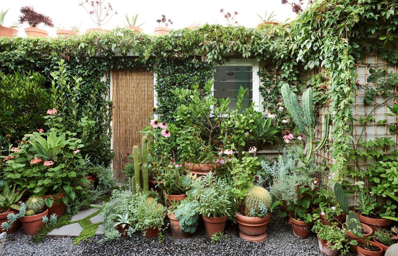 Dise o de jardines un jard n peque o y frondoso de 24 metros for Arbolitos para jardines pequenos