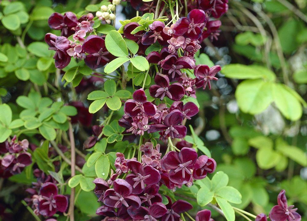 Plantas Con Flores Rojas En Forma De Campana