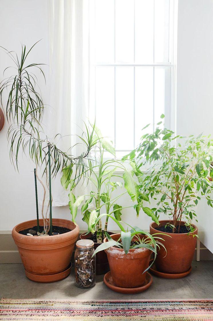 Plantas en la decoración del monoambiente