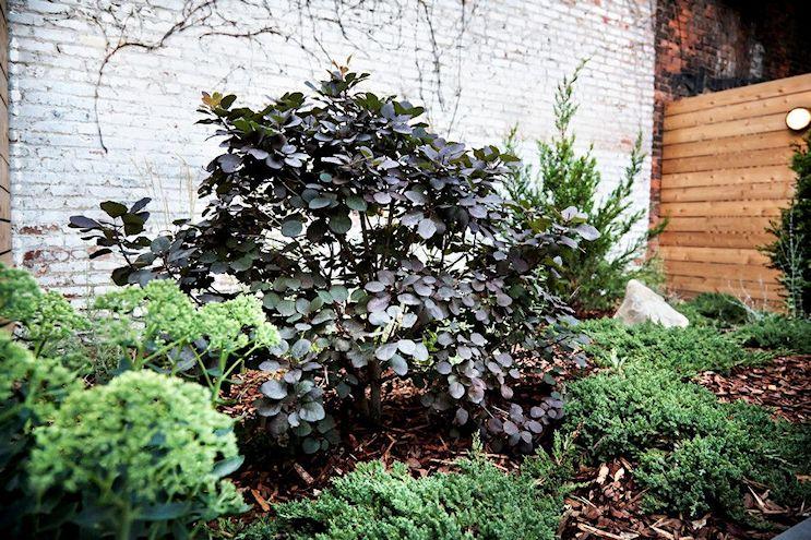 Diseño de patios modernos: una renovación de alto impacto 4