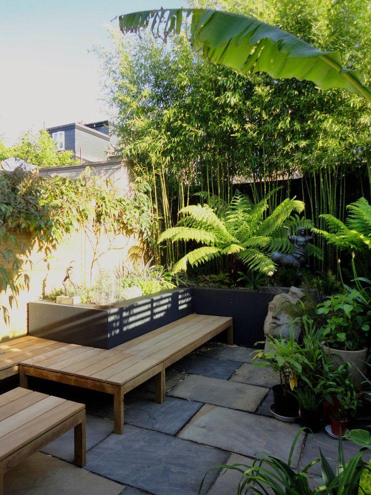 El bambú, el bananero y el helecho arbóreo comienzan a aportar un marcado estilo tropical al patio pequeño