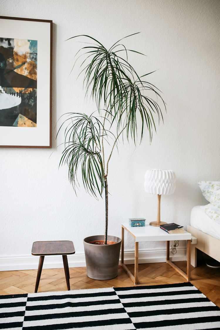 Las plantas y los cuadros suman colores diferentes a la decoración