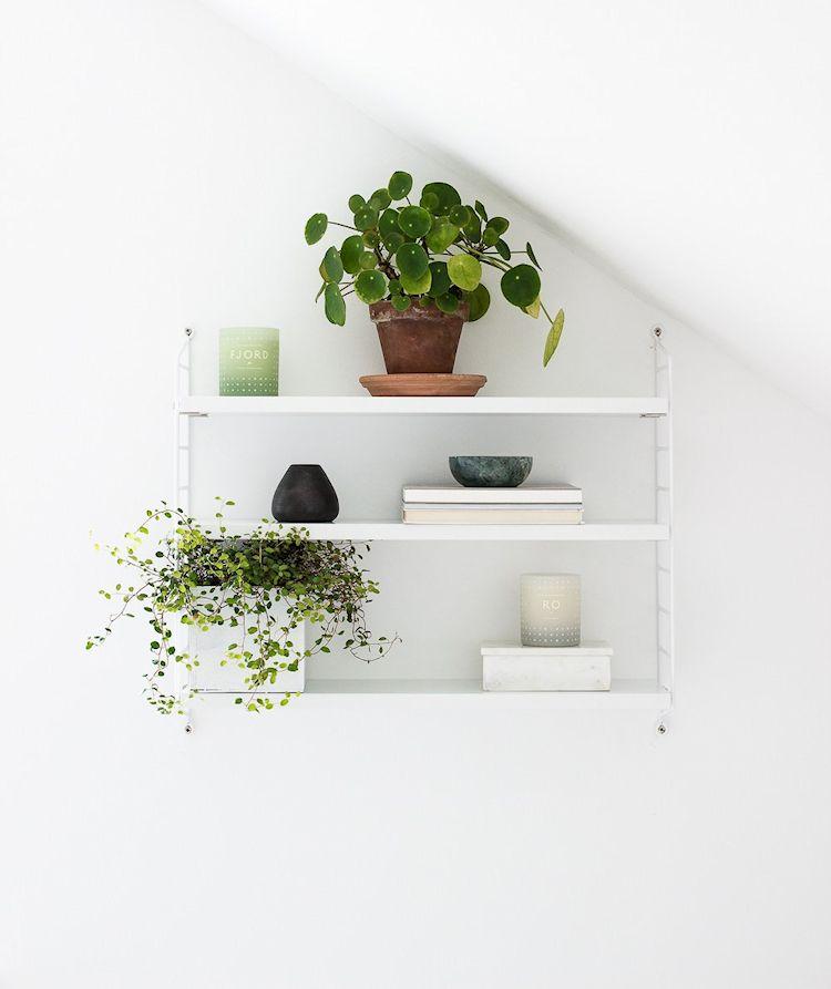 Pilea peperomioides - Planta clásica utilizada en ambientaciones de estilo nórdico