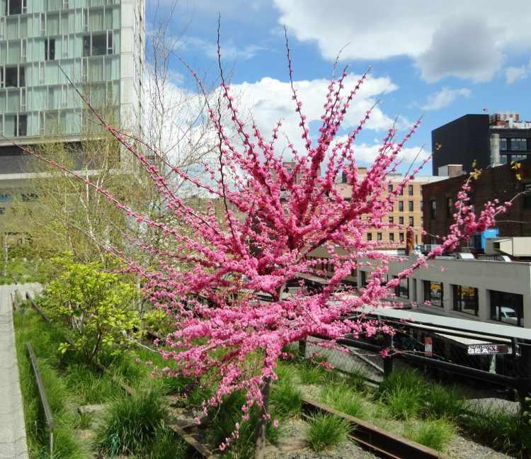 Jardinería y Plantas: 10 árboles para jardines pequeños