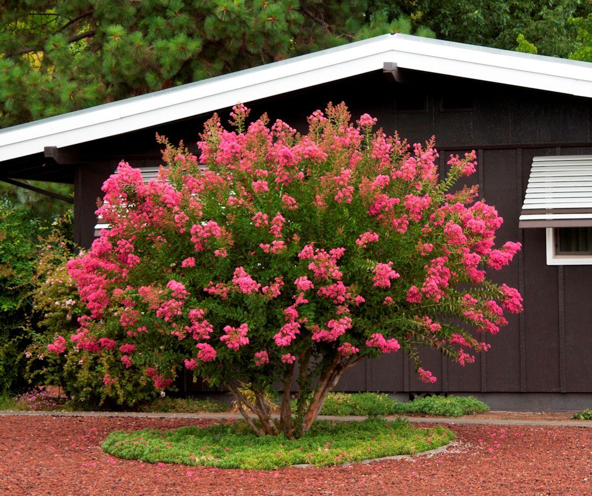 Jardineria Y Plantas 10 Arboles Para Jardines Pequenos Estilos Deco