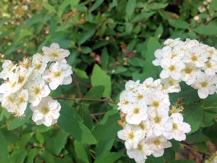 Flores de la Corona de Novia