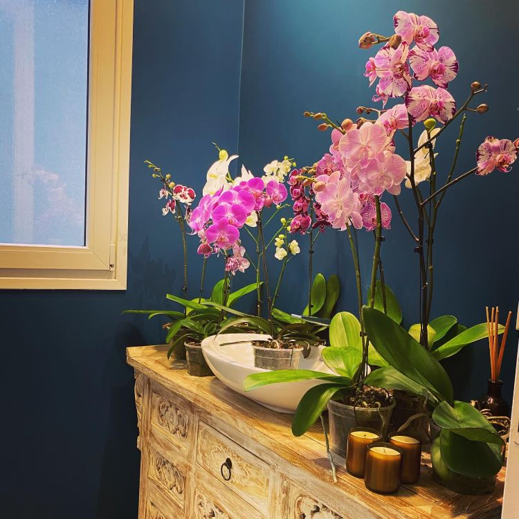 Anette Plants & Flowers 1
