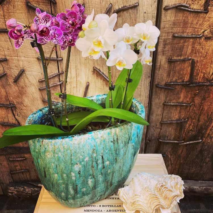 Anette Plants & Flowers 2
