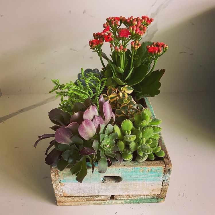 Anette Plants & Flowers 3