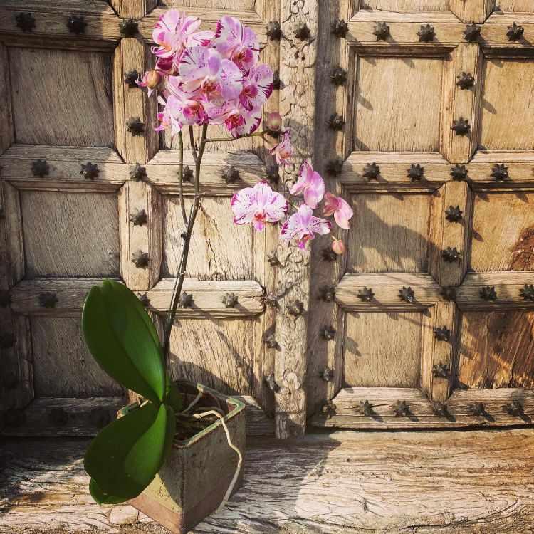 Anette Plants & Flowers 4