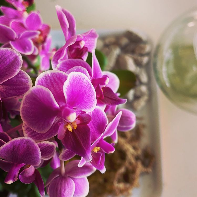 Anette Plants & Flowers 7