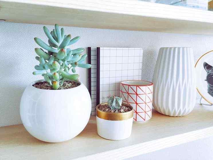 Mi Mercadito Macetas cactus suculentas 1