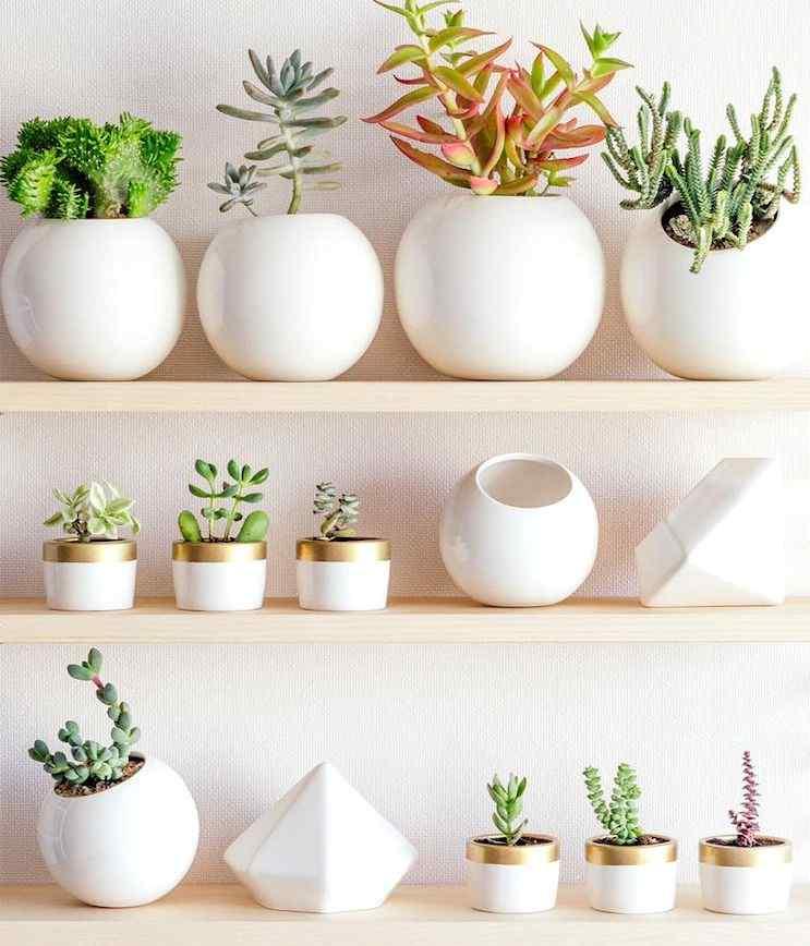 Mi Mercadito Macetas cactus suculentas 2