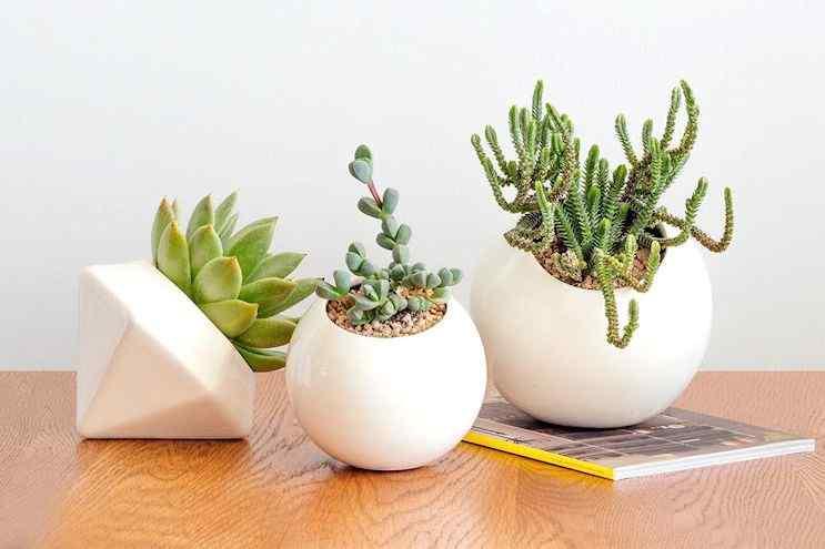 Mi Mercadito Macetas cactus suculentas 4