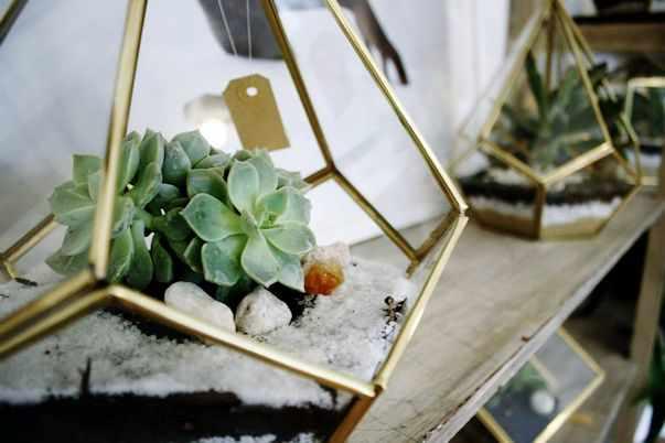 Herbario Jardin Terrario 3