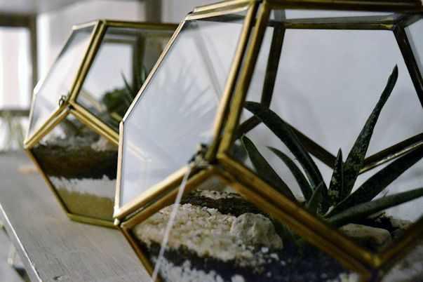 Herbario Jardin Terrario 5