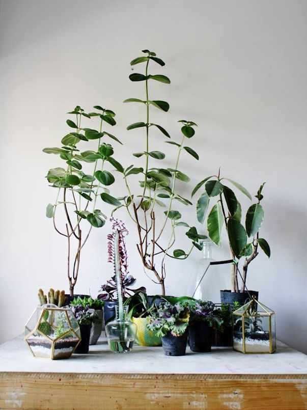 Herbario Jardin Terrario 6
