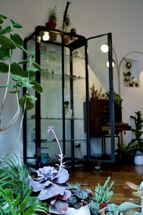 Herbario Jardin Terrario 8